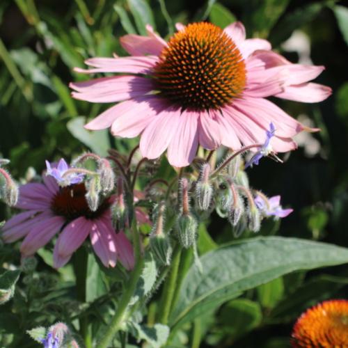 meanwhile-gardens-flower_0